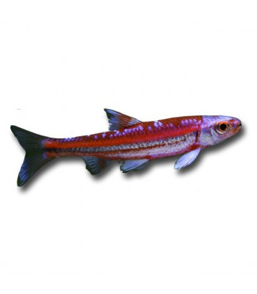 Egyéb hal
