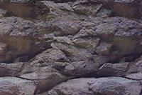 akvárium háttérposzter
