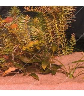JBL Sansibar RED 5 kg - akvárium talaj - piros