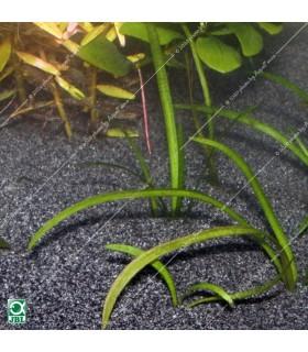JBL Sansibar DARK (BLACK) 10 kg - természetes akvárium talaj - fekete