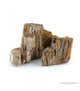 Dekorkő - Fossil wood / kg
