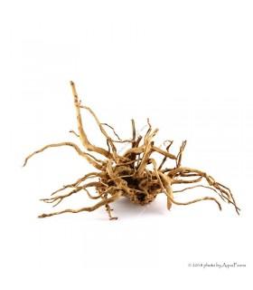 Finger gyökér (30-35 cm) (Spiderwood, Red moor) / kg