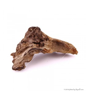 Mopani (vasfa) dekorfa - nano (8-10 cm) /db