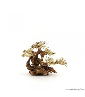 Bonsai Wood S dekorfa - 23x17x10 cm