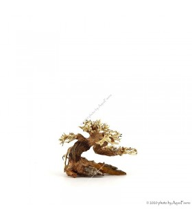 Bonsai Wood SSS dekorfa - 12x10x8 cm